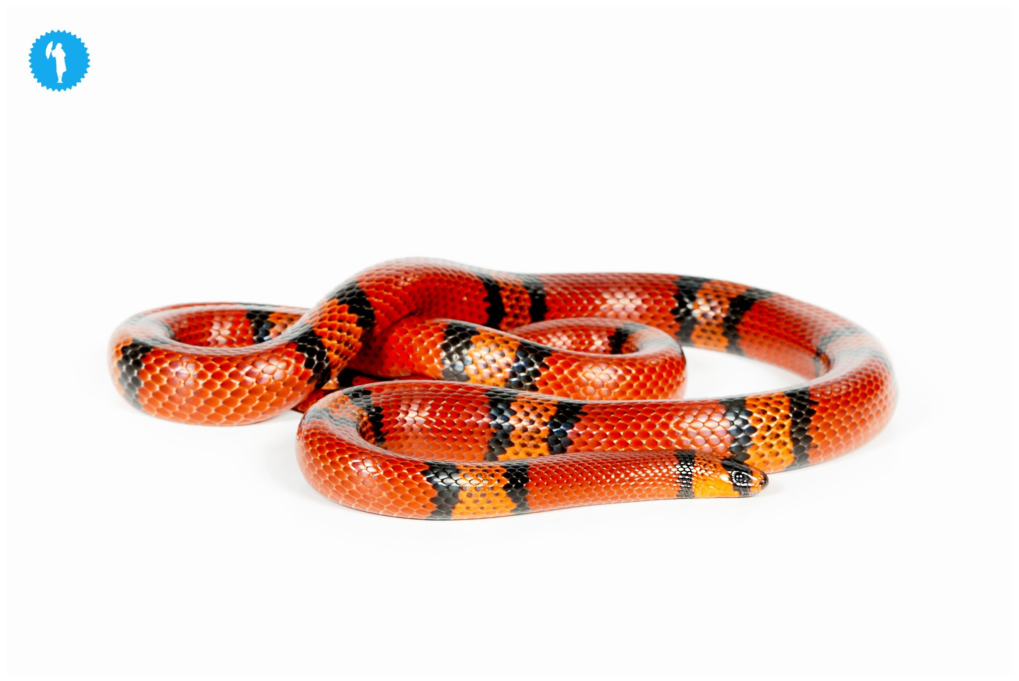 Snake pet photography by Emily Beatty, 2013.