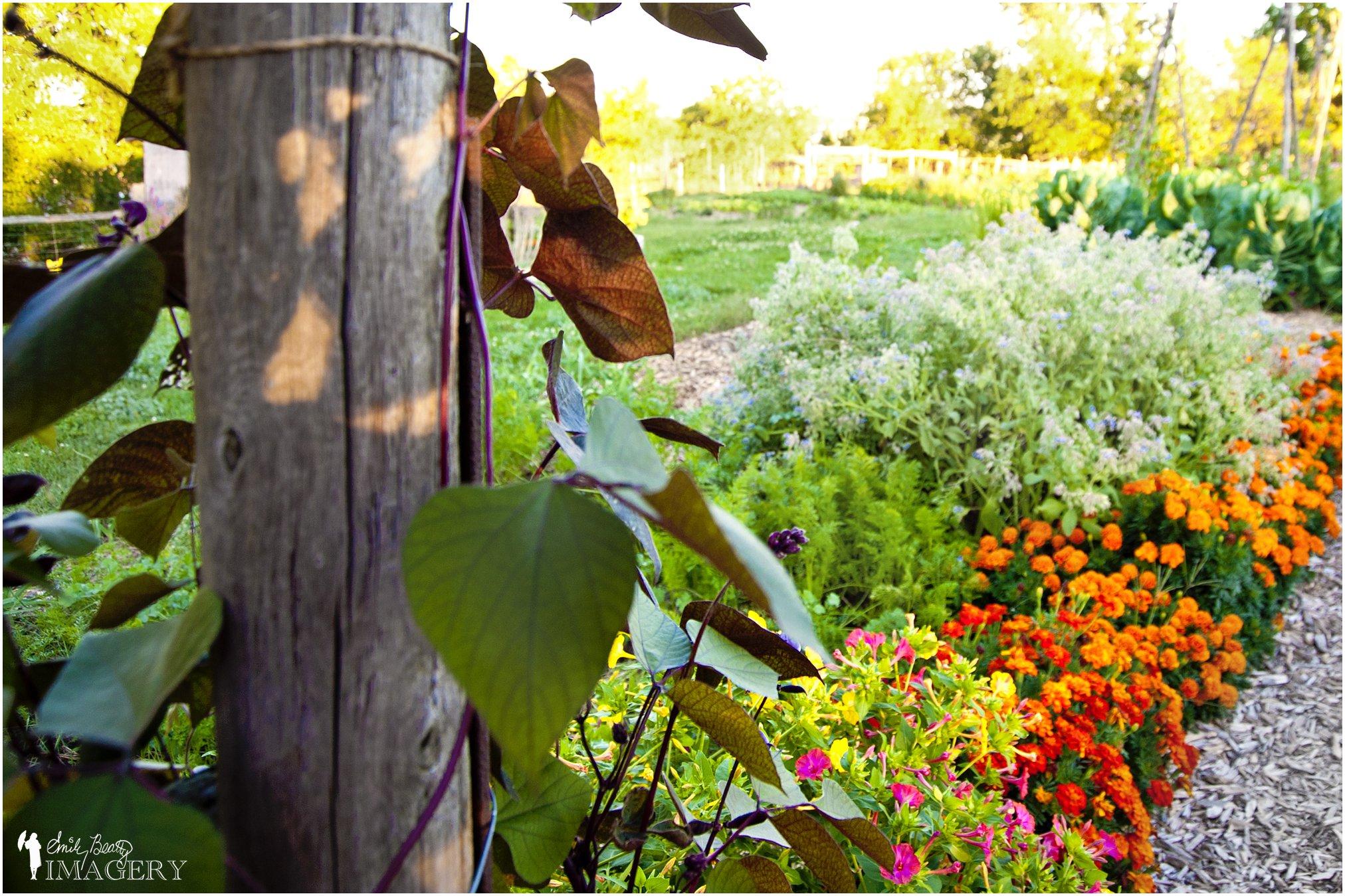 garden_Steckle_Heritage_Farm